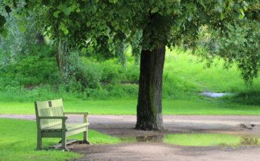 park_bench_park_rest_trees_finland_helsinki_sit_recovery-1220807